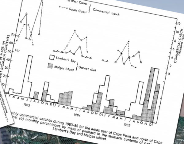 Pilchard distribution in South African waters, 1983–1985